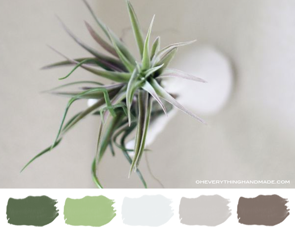 color palette air plant wall hanger